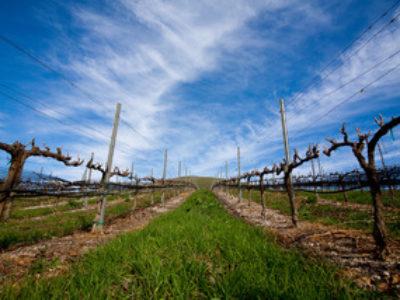 Value of California Vineyards Continue to Creep Upward