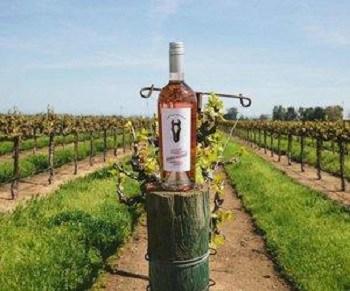 Dark Horse California Rosé Wine Review | I Love Wine