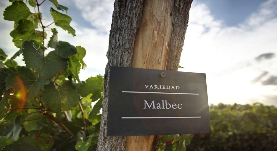 malbec wine, dark red wine, types of red wine