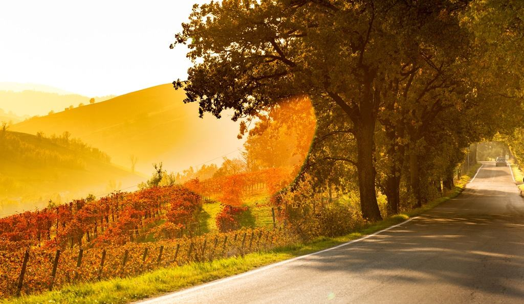 Lambrusco wine Italian Wine Region