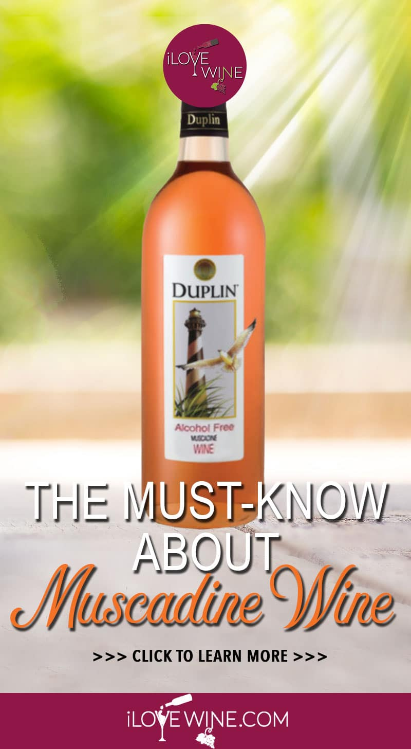 With the right understanding and awareness, there's a lot to love about Muscadine Wine. Not found anywhere else in the world, Muscadine is one of North America's true native wine grapes. Click to learn more about Muscadine Wine! Love wine   Muscadine Wine   Unique Wine   American Wine #lovewine #wine #Muscadinewine