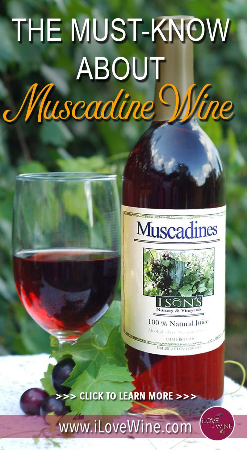 There are several characteristics of the Muscadine grape that make it unique, and its superfruit properties are one of its best qualities. With super high levels of antioxidants and ellagic acid, studies of Muscadine have shown that it can be effective at targeting illnesses. Click to learn more about Muscadine Wine! Love wine   Muscadine Wine   Unique Wine   American Wine #lovewine #wine #Muscadinewine