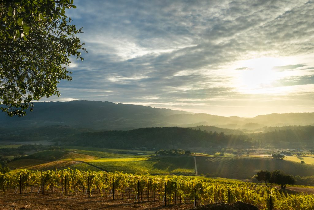 Panorama of Sonoma Valley wine country with rolling hills in autumn at harvest time.