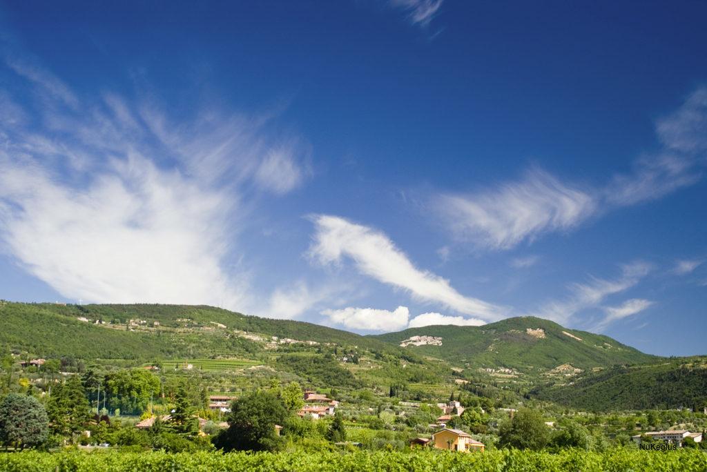 vineyards near valpolicella in italy