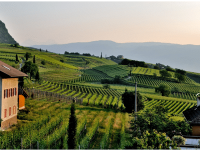 All About Dolcetto Wine