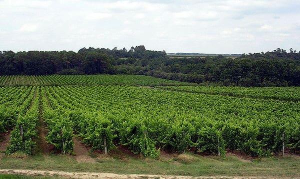 vineyards near armagnac