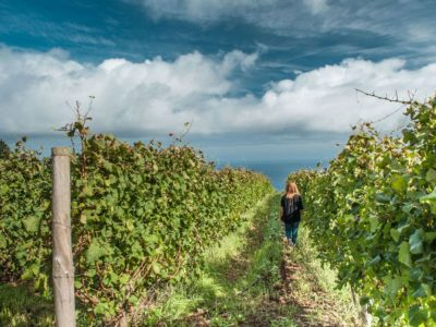"Madeira Wine: ""the wine that made the round trip"""