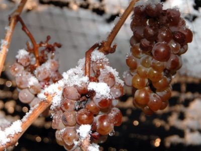 What is Ice Wine?