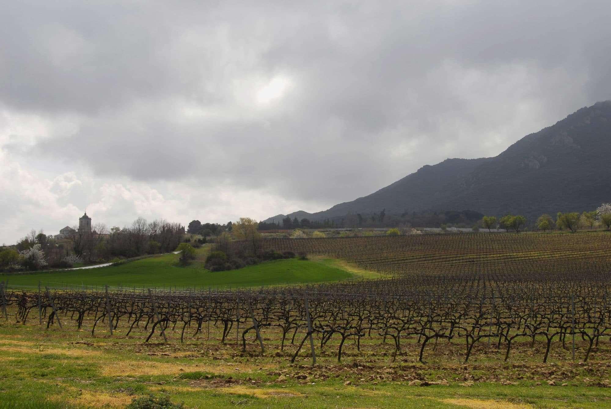 Navarra Spanish wine regions