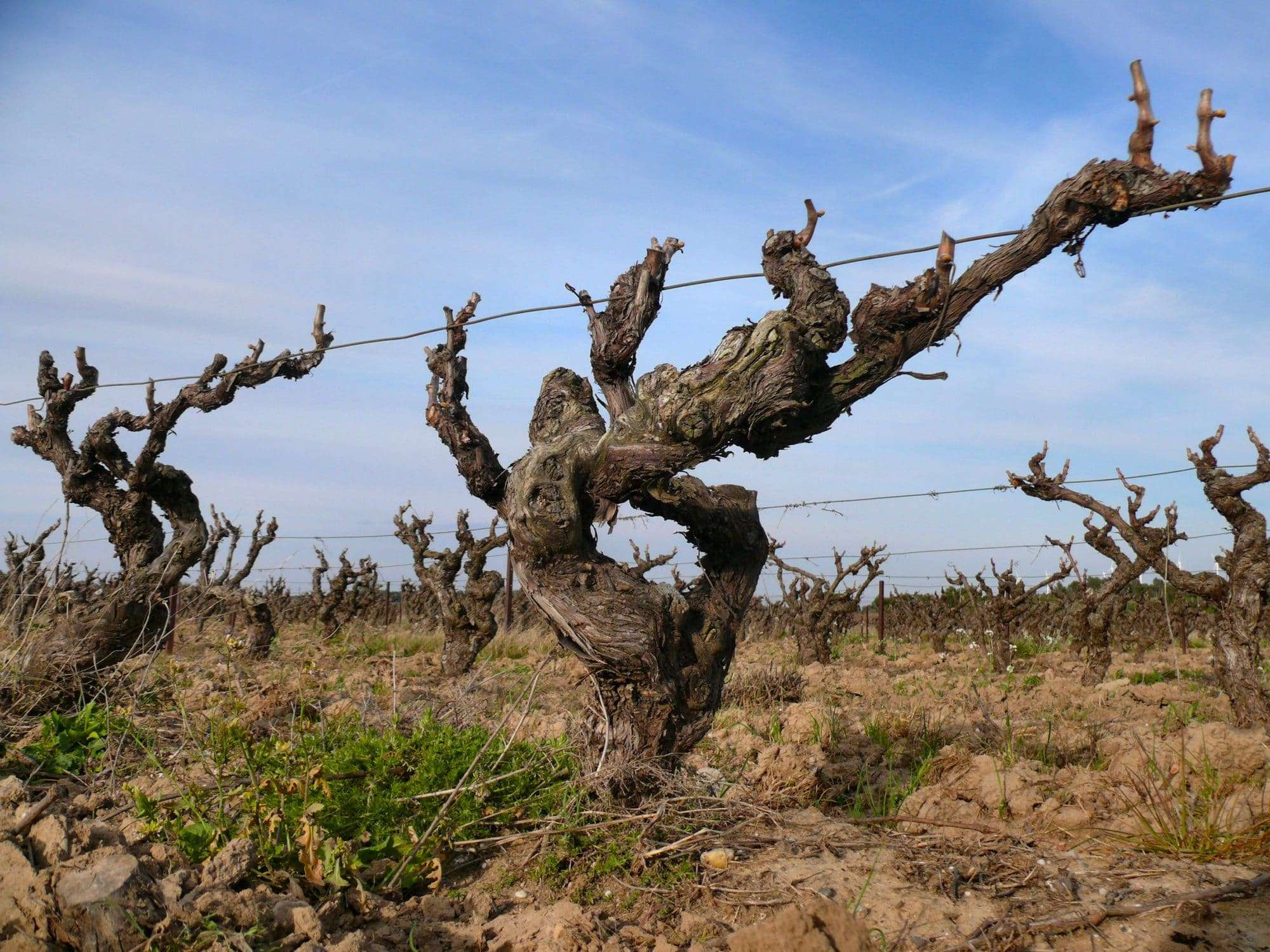 Languedoc-Roussillon wines French wine regions