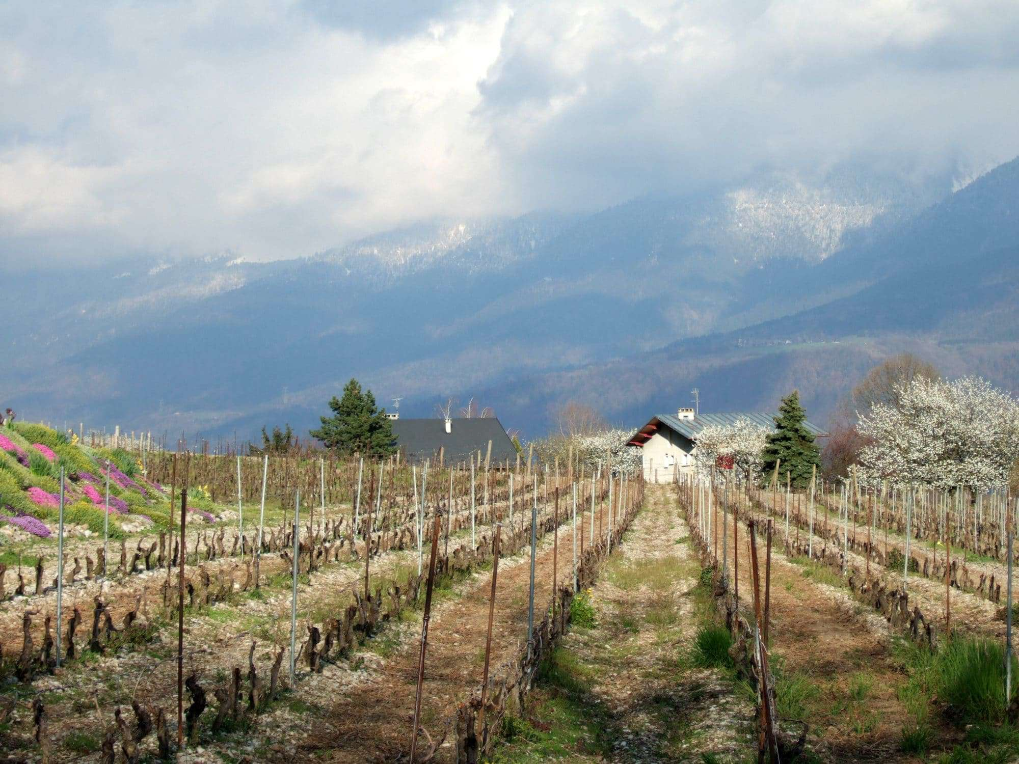 Savoie French wine regions