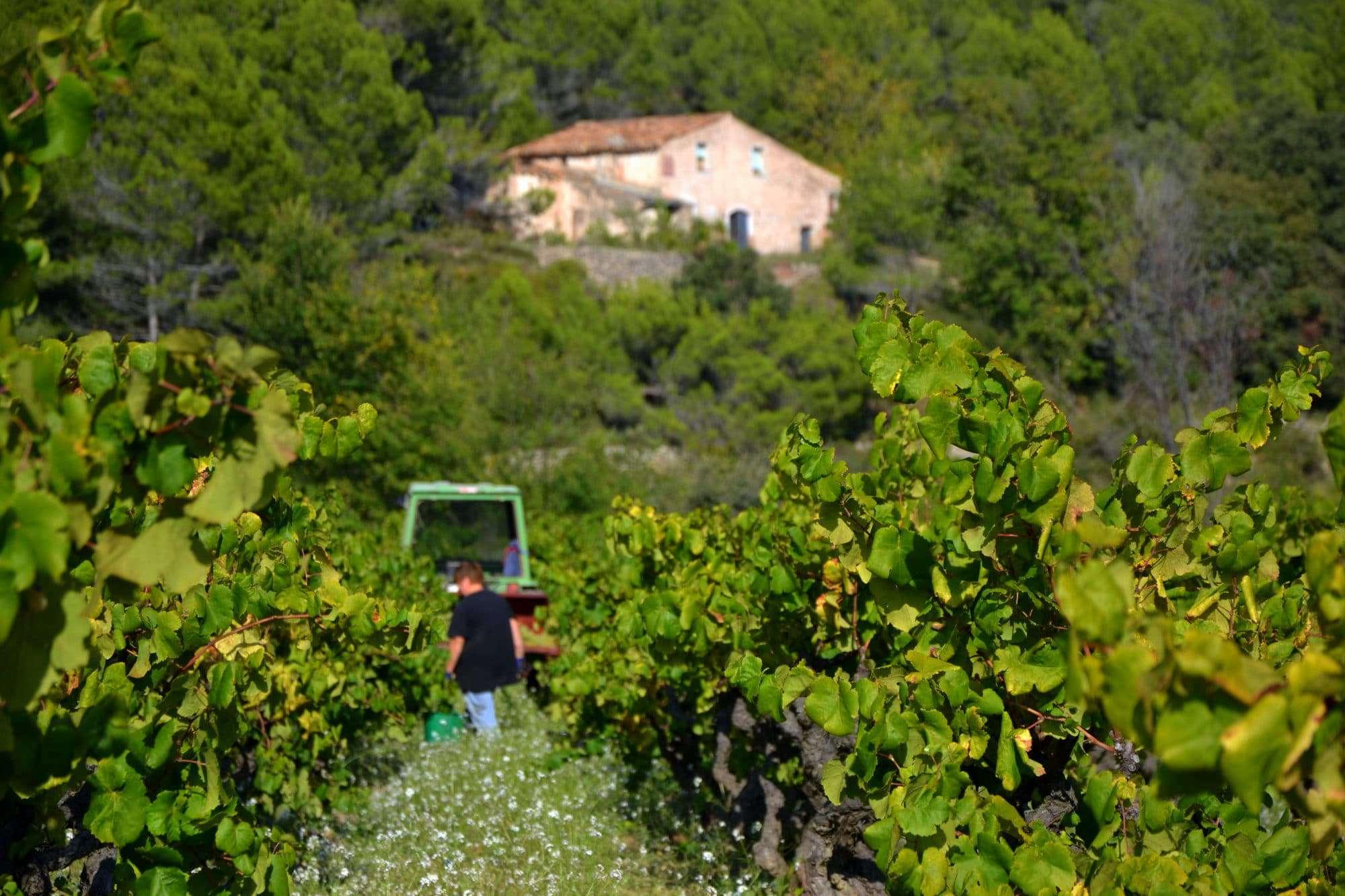 Catalonia Spanish wine regions
