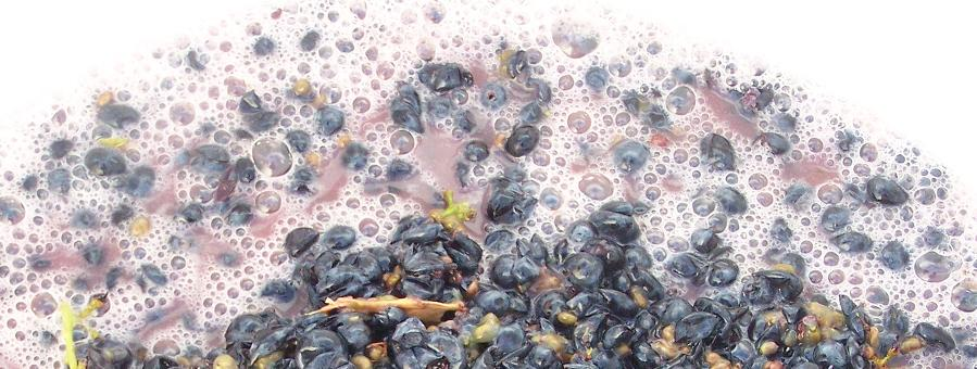 crushed grapes fermenting and bubbling during fermentation in winemaking