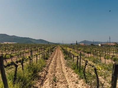 Comparing America's Epic Wine Countries- Napa and Sonoma
