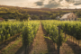 Behind the Scenes: What It Takes to Maintain a Vineyard