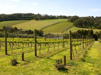 5 Reasons to Travel to Mornington Peninsula Wineries