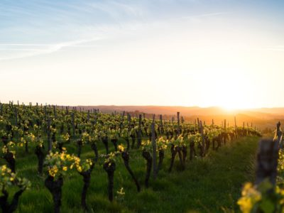 Everything You Need to Know about Gascony Wines