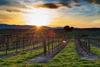 A vineyard in Santa Barbara.