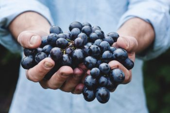 A person holding red grapes.