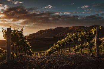 A vineyard in California.